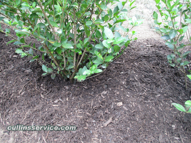 Cullins Service covered the top of each bush w/ fertilizer and mulch to help keep the soil moist