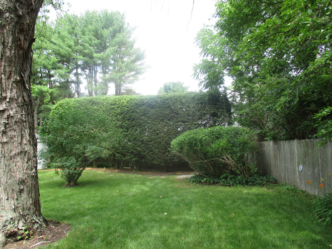 Cullins Service Landscape Bushes Trimmed and Shaped Needham Property