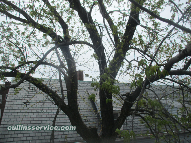 Birds eye view of limbs to be trimmed