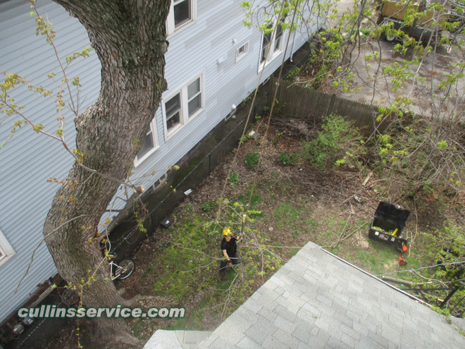Lowering the cut branch safely to the ground