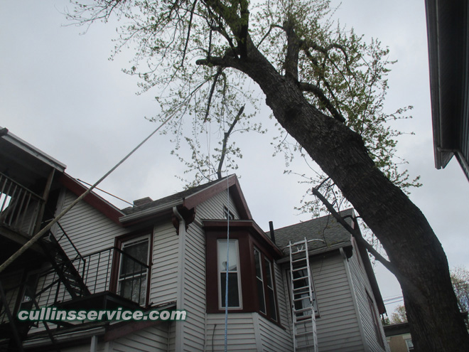 Cullins Service keeping massive branch from the house