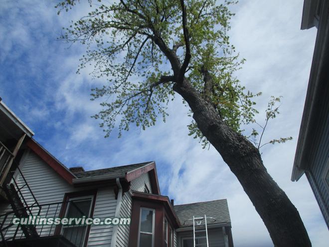 Tree trimming Allston, ma Cullins Service