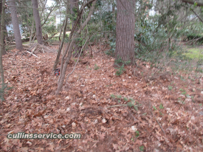 Cullins service leaf removal service Needham
