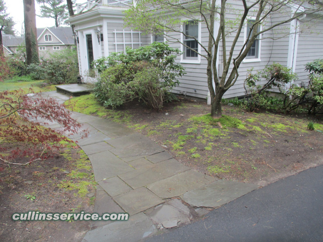 Let's get rid of this moss and put down some mulch