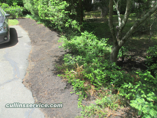 Another view of the mulched along the driveway