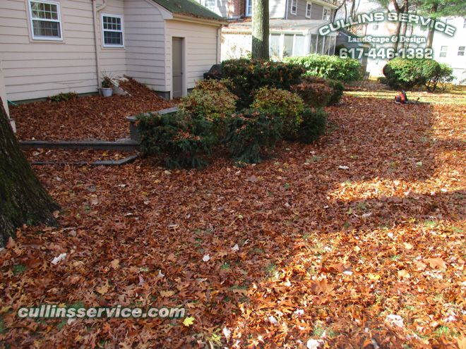 Cullins Service leaf Removal Service Is about to begin