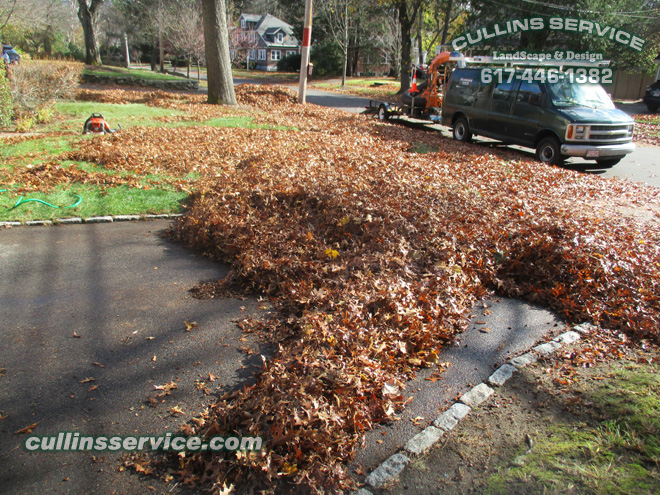 Removing leaves during a New England Fall is quite a process