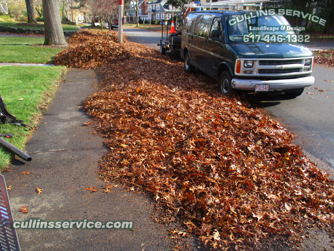 We move all leaves to the front of the house