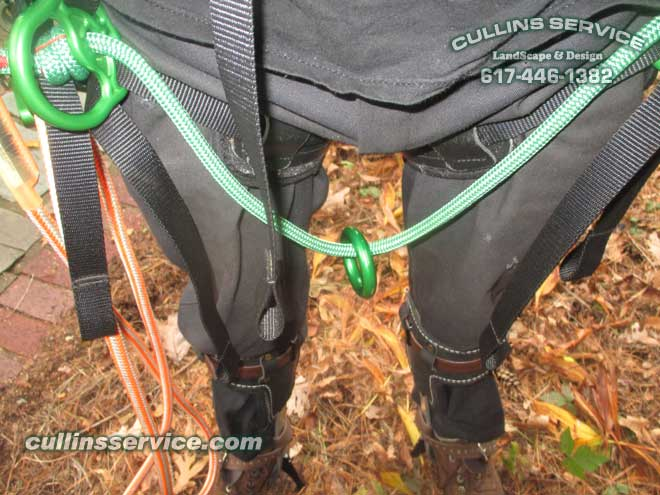 Teufelberger TreeMotion climbing Harness w/ lanyard Buckingham Rope Grab Length Adjustment Device
