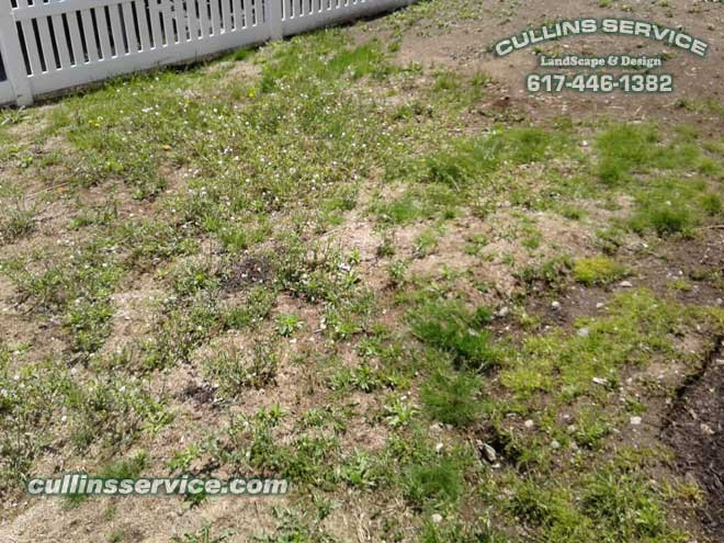 A nice mix of weeds, crab grass and patchy thatch grass.