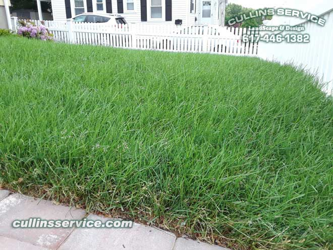 Close up of the lush green grass.