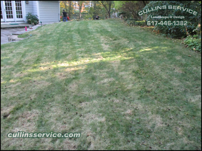 This lawn has been aerated time to seed and fertilize