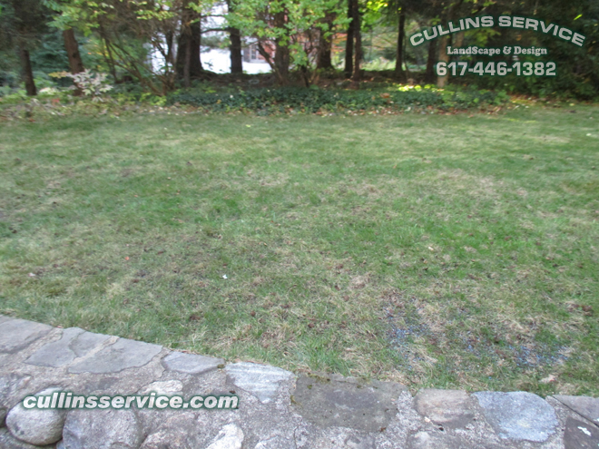 This lawn has been thatched, aerated, seeded and fertilized