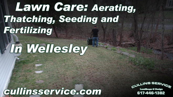 Fall Lawn Care Thatching Aeration Seeding Fertilizing in Wellesley, Ma Cullins Service