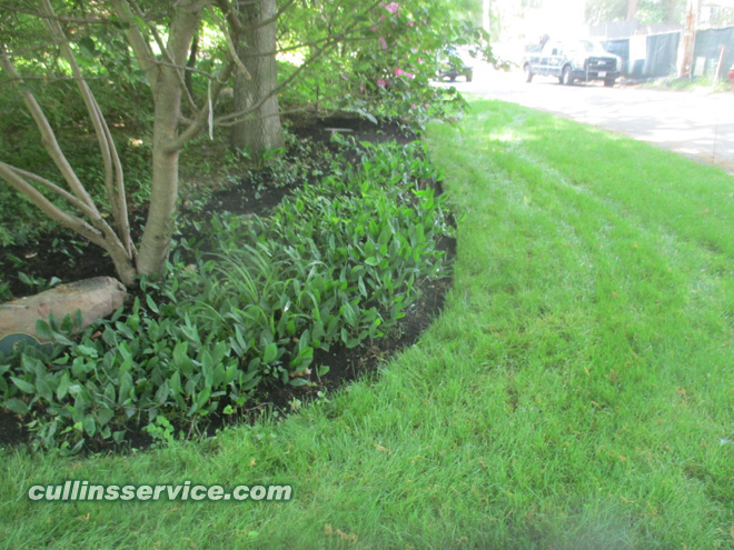 Mulching over flower beds