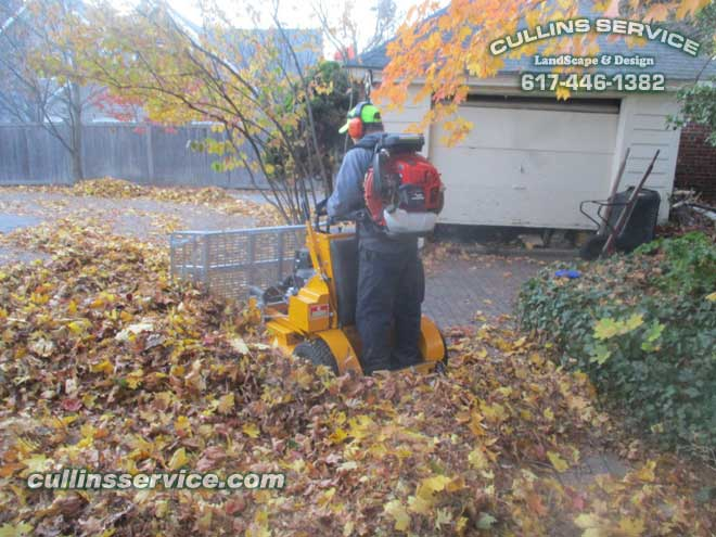 The leaves are through the gate and are ready for plowing