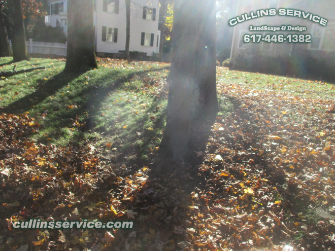 Cullins Service first look before removing leaves