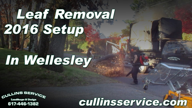 Leaf Removal Service Fall Cleanup Wellesley, Ma Cullins Service